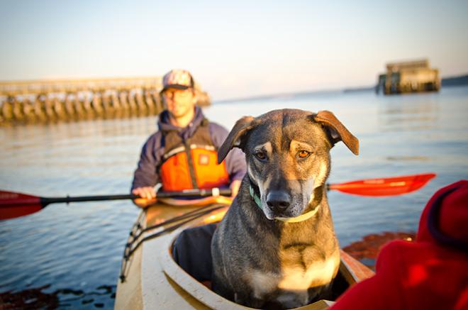 Kayak with dog, osprey triple