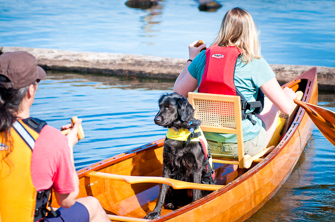 doggie canoing